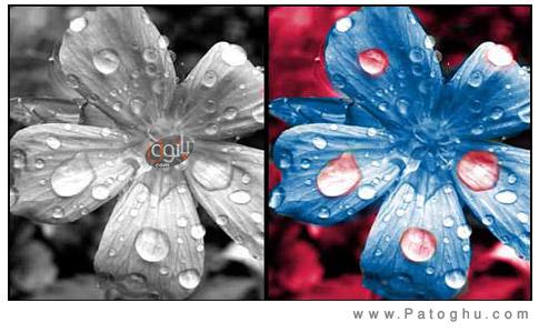 دانلود فیلم آموزشی فتوشاپ   تغییر رنگ تصاویر در فتوشاپ Colorization