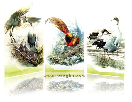 دانلود والپیپر های نقاشی از پرندگان طبیعت - اندازه ۳۶۰×۶۴۰