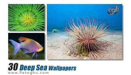 مجموعه ۳۰ تصویر زمینه دیدنی زیبا و کیفیت بالای موجودات دریایی