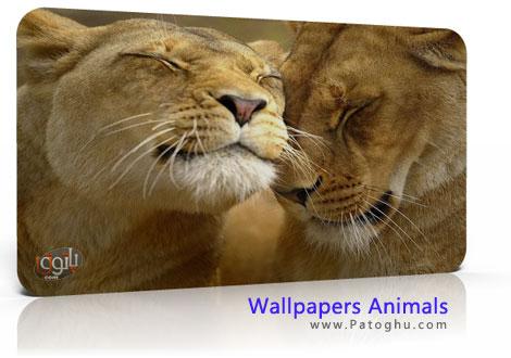 دانلود کلکسیون تصاویر فوق العاده زیبای حیوانات Wallpapers Animals