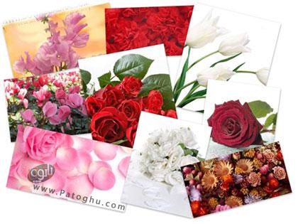 مجموعه ۵٠ والپپر زیبا و جدید از گل های رنگارنگ