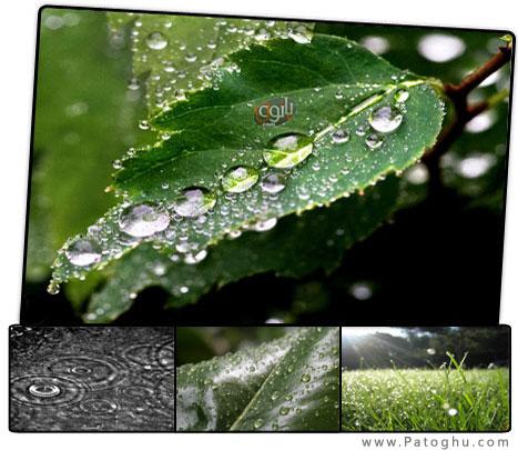 عکس+باران+پاتوق