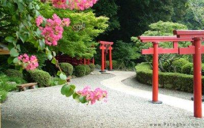مجموعه بی نظیر از عکس شکوفه های بهاری برای پس زمینه دسکتاپ Flowers Sakura Spring