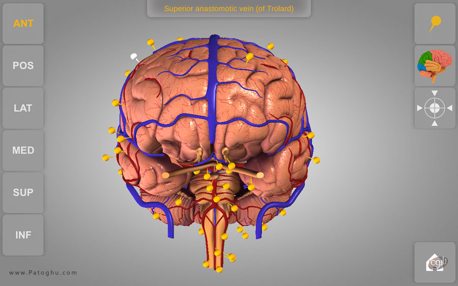 Brain 3d anatomy