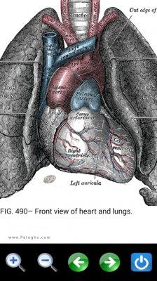 آناتومی کامل بدن انسان برای اندروید Visual Anatomy 2 v3.0 Final