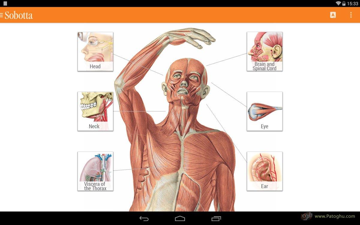 Sobotta Anatomie
