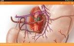 دانلود آناتومی کامل بدن انسان برای اندروید Sobotta Anatomy Atlas 2.9.1