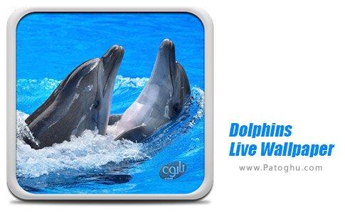 دانلود نرم افزار Dolphins Live Wallpaper برای اندروید