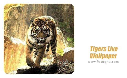 دانلود نرم افزار Tigers Live Wallpaper برای اندروید