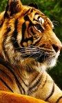 دانلود نرمافزار Tigers Live Wallpaper برای اندروید