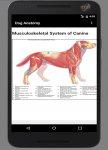 دانلود Dog Anatomy : Canine Anatomy